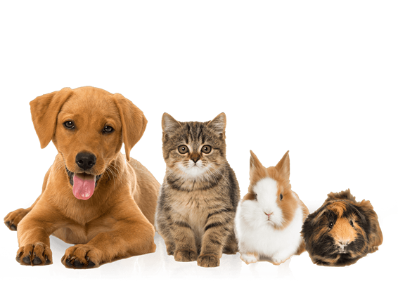 pet products they love at great prices