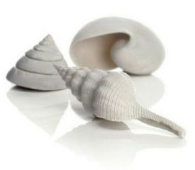 Oase Biorb Sea Shell - Set 3 - White