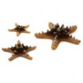 Biorb Sea Stars Natural (3pk)