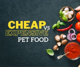 Cheap Vs Expensive Pet Food