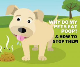 Why Do Pets Eat Poop